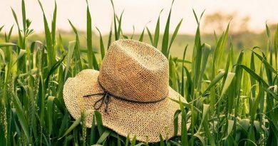 Fondi regionali per agricoltura